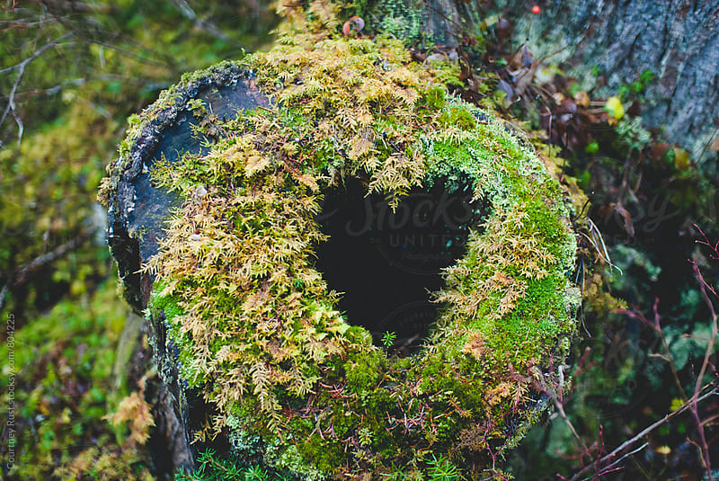 mossy heart in a log by Courtney Rust for Stocksy United