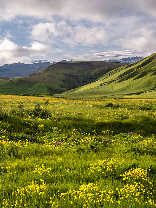 Green Summer Landscape in Iceland by Andreas Wonisch for Stocksy United