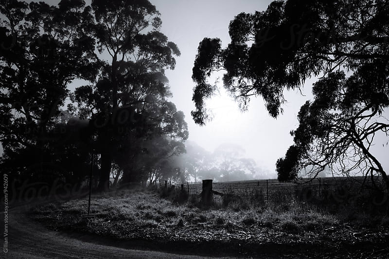 country scene with fog, in black and white by Gillian Vann for Stocksy United