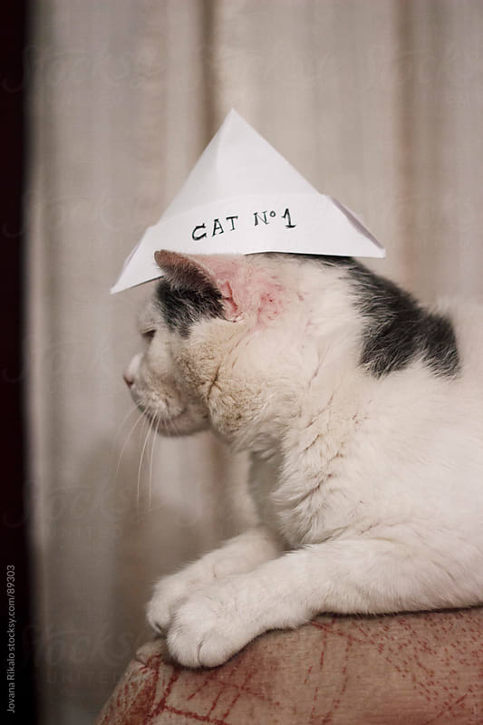 Proud cat  by Jovana Rikalo for Stocksy United