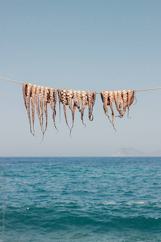 Octopus drying in the sun by Branislava Živić for Stocksy United