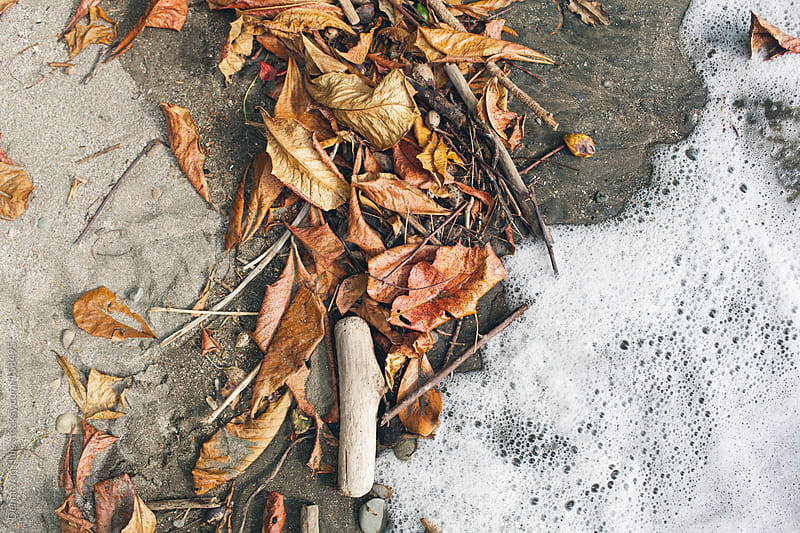 Driftwood and leaves washed on ti the beach by Denni Van Huis for Stocksy United