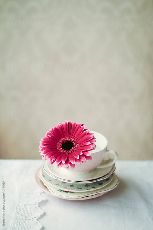 Gerbera in a teacup by Ruth Black for Stocksy United