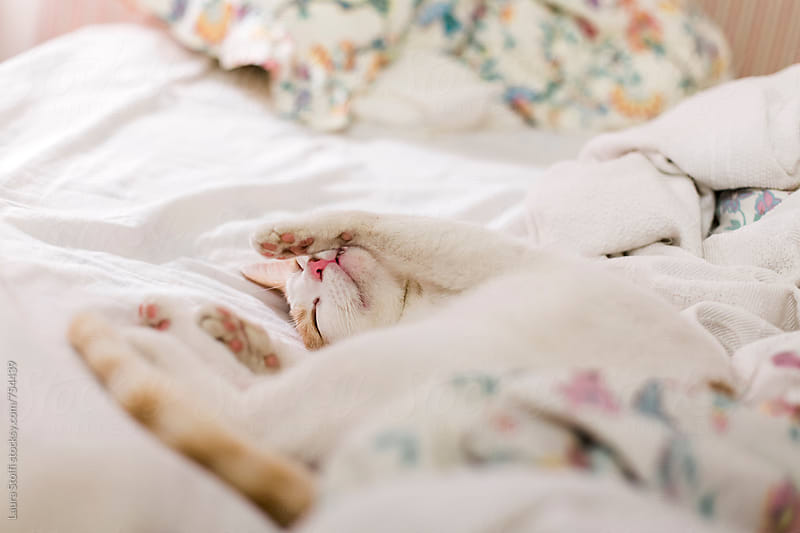 White and ginger cat sleeps on his back on unmade bed with floral sheets by Laura Stolfi for Stocksy United