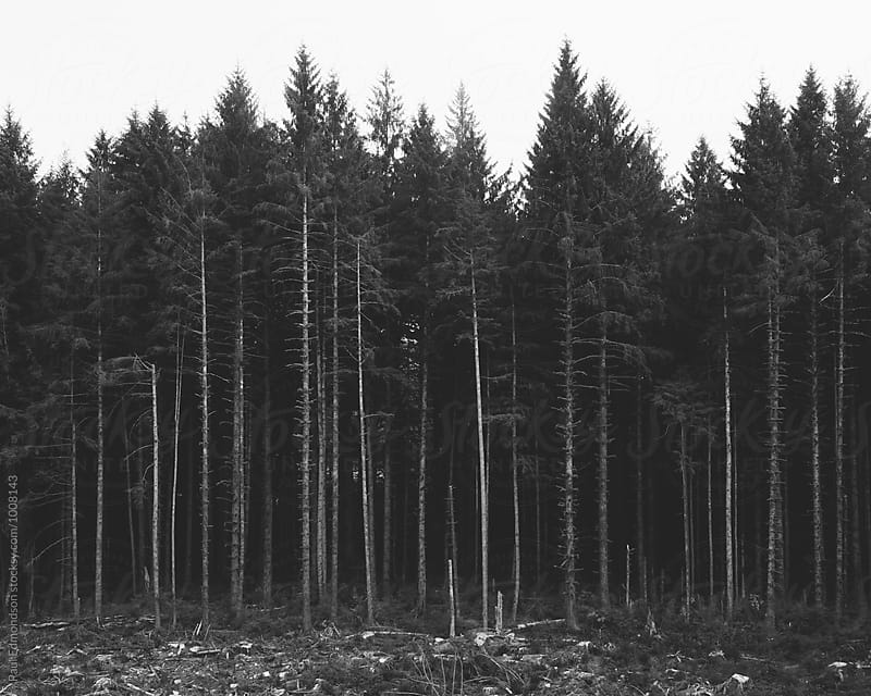 Logged evergreen forest, Olympic Peninsula, WA, USA by Paul Edmondson for Stocksy United