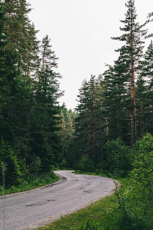 Curvy road in the woods by Aleksandar Novoselski for Stocksy United