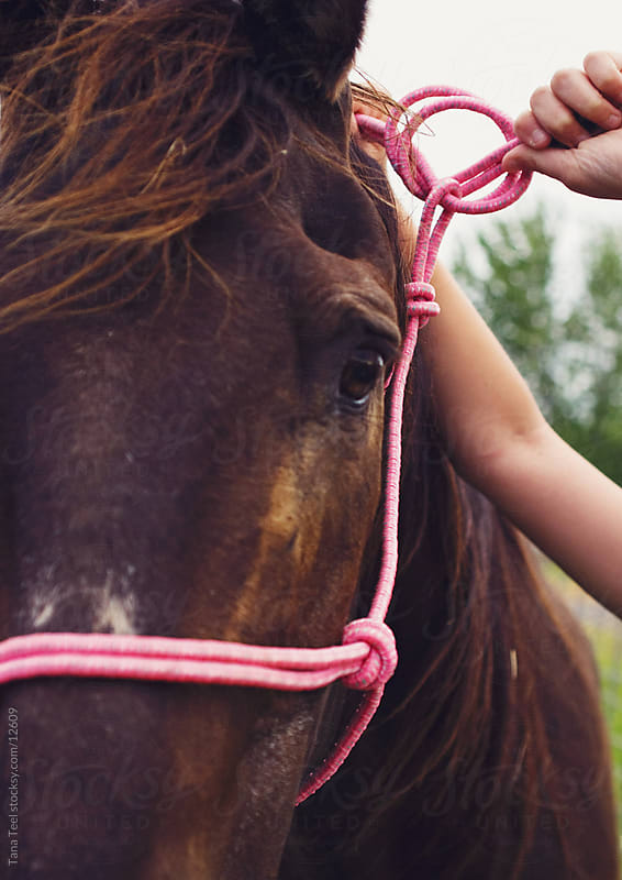 The horse in a pink halter.  by Tana Teel for Stocksy United