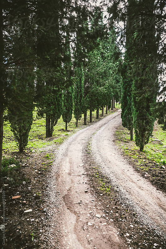Country Road with Cypresses in Tuscany , Italy by Giorgio Magini for Stocksy United
