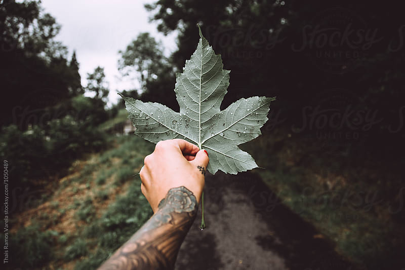 hand hoding a a green leaf by Thais Ramos Varela for Stocksy United