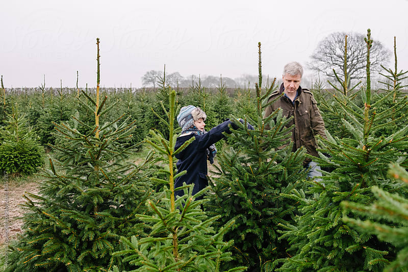 Child selects Christmas tree with his Dad by Rebecca Spencer for Stocksy United
