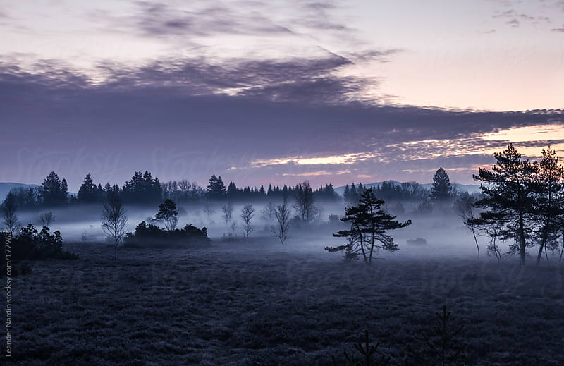 moor landscape in early morning mist by Leander Nardin for Stocksy United