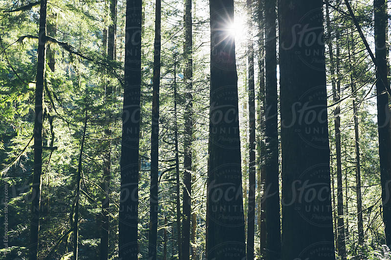 Sunlight shining through lush, moss covered forest by Paul Edmondson for Stocksy United