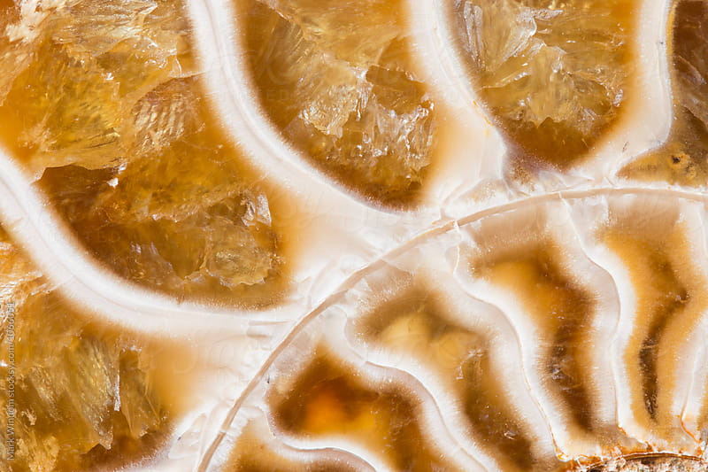 Ammonite fossil chambers macro by Mark Windom for Stocksy United