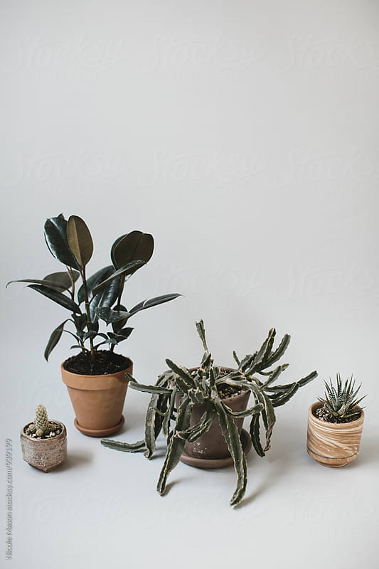 potted plants on grey background by Nicole Mason for Stocksy United