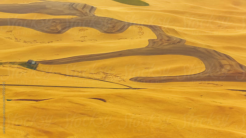 wheat field in Palouse, WA by yuanyuan xie for Stocksy United