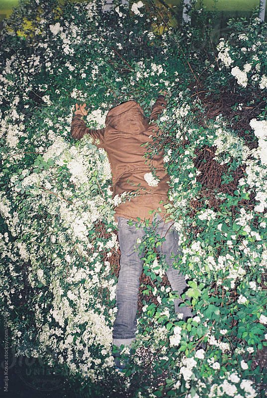 Young man having fun  in the bushes full of flowers by Marija Kovac for Stocksy United