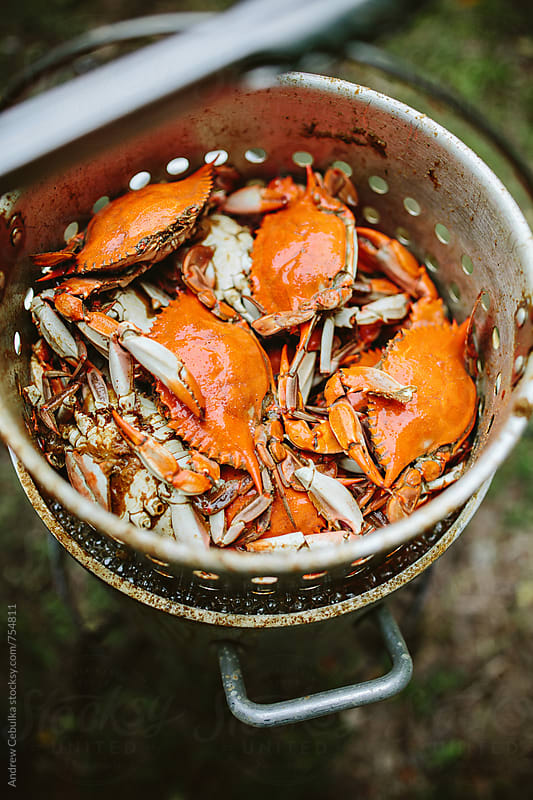 crabs being steamed - digital file by Andrew Cebulka for Stocksy United