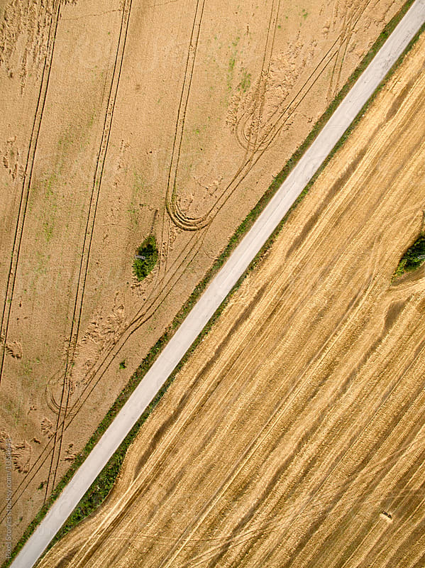 Straight road cutting through farmfields by Pixel Stories for Stocksy United