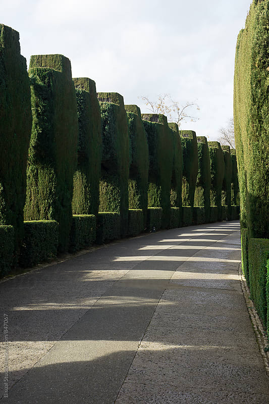 Maze in a garden by Bisual Studio for Stocksy United