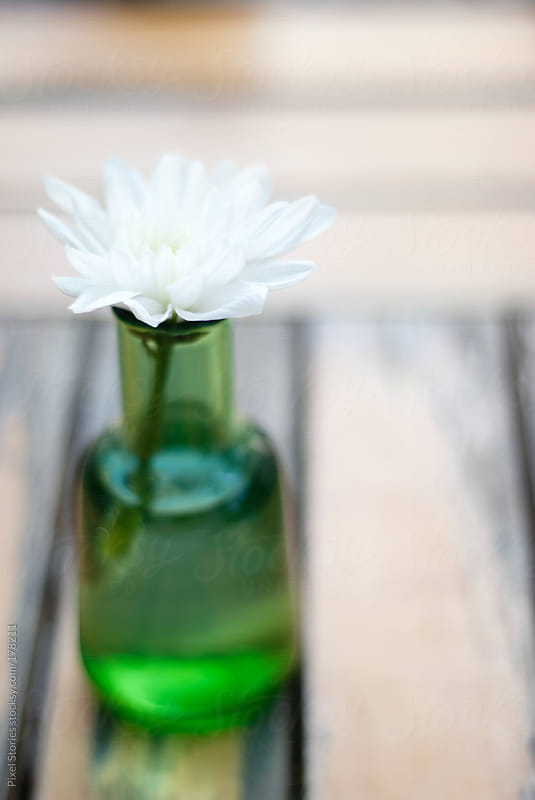 Gentle white flower on table by Pixel Stories for Stocksy United