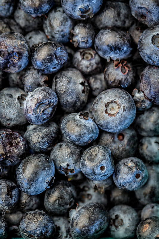 Blueberries by ALAN SHAPIRO for Stocksy United
