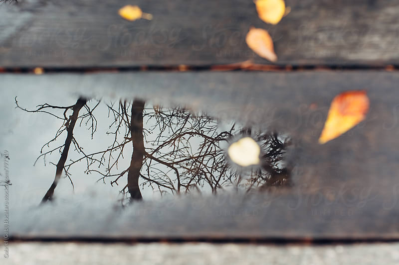 Tree branches reflection in a puddle by Gabriel (Gabi) Bucataru for Stocksy United