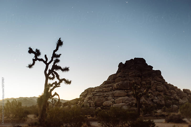 Structures of Joshua Tree. by Christian McLeod Photography for Stocksy United
