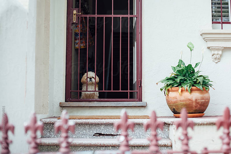 Cute dog sitting at the front door of a house by Kara Riley for Stocksy United