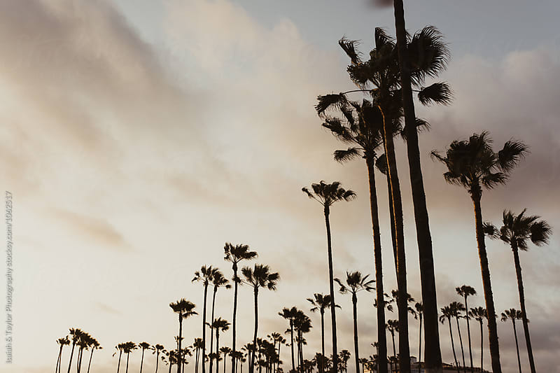Palm Tree Landscape by Isaiah & Taylor Photography for Stocksy United