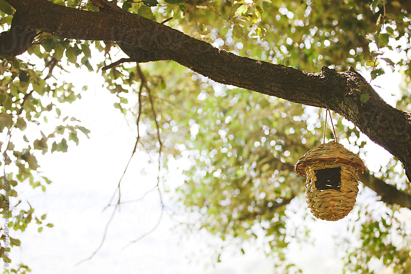 Artificial birds nest on a tree. by BONNINSTUDIO for Stocksy United