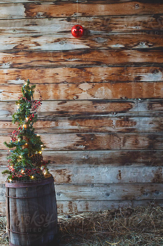 An alpine tree decorated with lights and berry garland sits in old barrel by a wall with a single or by Tana Teel for Stocksy United