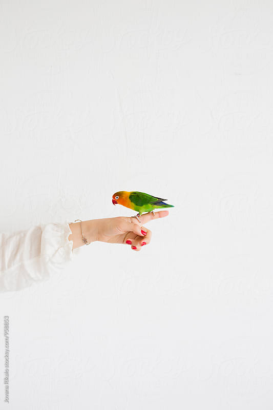 Parrot standing on woman's finger by Jovana Rikalo for Stocksy United