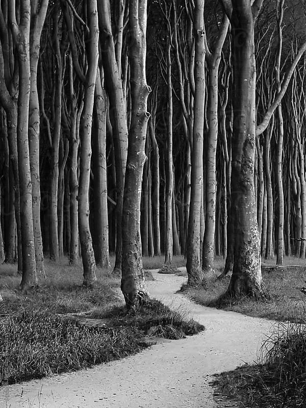 Black and white image of a spooky looking forest by Melanie Kintz for Stocksy United