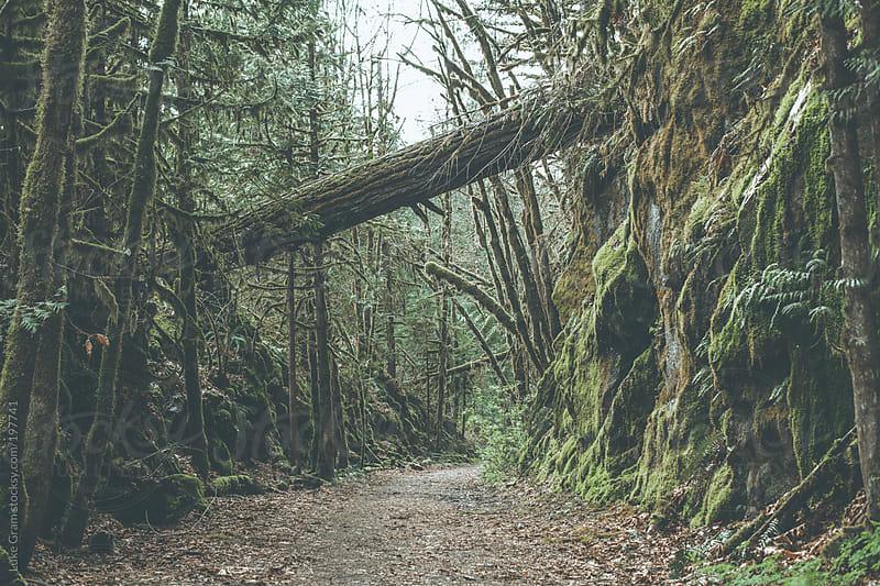 Vancouver Roadtrip by Luke Gram for Stocksy United