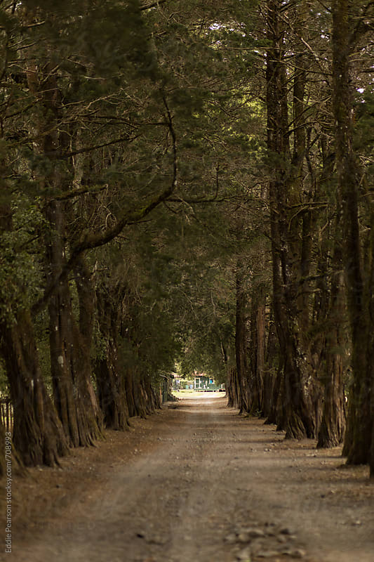 Tree lined road in the mountains of Panama by Eddie Pearson for Stocksy United