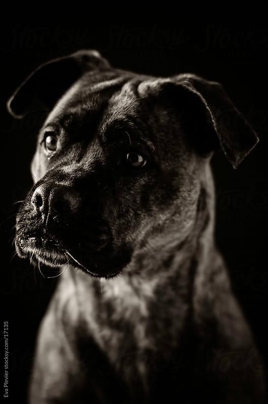 Dog by Eva Plevier for Stocksy United