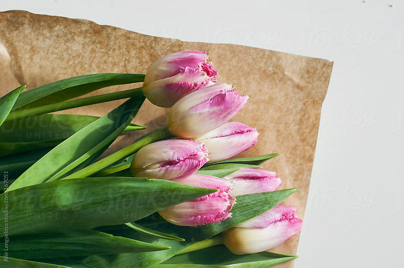 Pink Tulips by Alie Lengyelova for Stocksy United