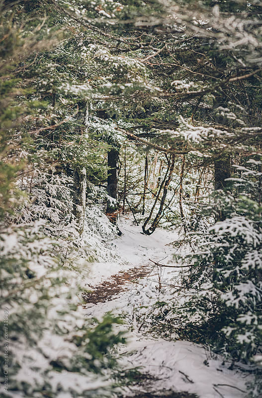 Snowy Trail by Arthur Chang for Stocksy United