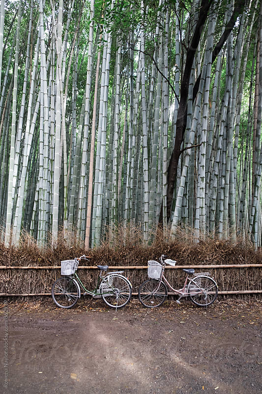 Bicycle parked in Bamboo Forest by Rowena Naylor for Stocksy United