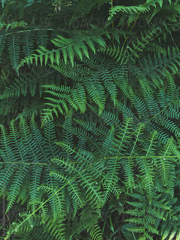 Overhead view of fern in forest by Jordi Rulló for Stocksy United