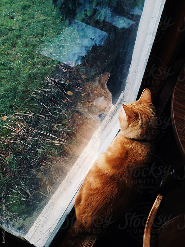 Cat looking at reflection in window by Kevin Gilgan for Stocksy United