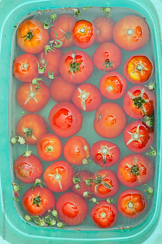 Fresh Tomatoes in Water by Marija Savic for Stocksy United