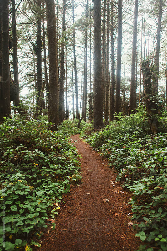 Hiking Trail through the Forest in Washington by michelle edmonds for Stocksy United