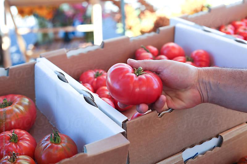 Man holding a heirloom tomato at the Farmer's Market by Carolyn Lagattuta for Stocksy United