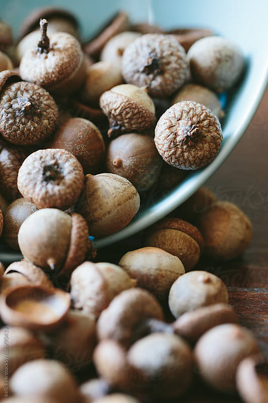 Closeup Of Brown Acorn Nuts In Blue Bowl by kelli kim for Stocksy United