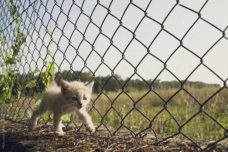Tenderly White Baby Cat  by HEX. for Stocksy United