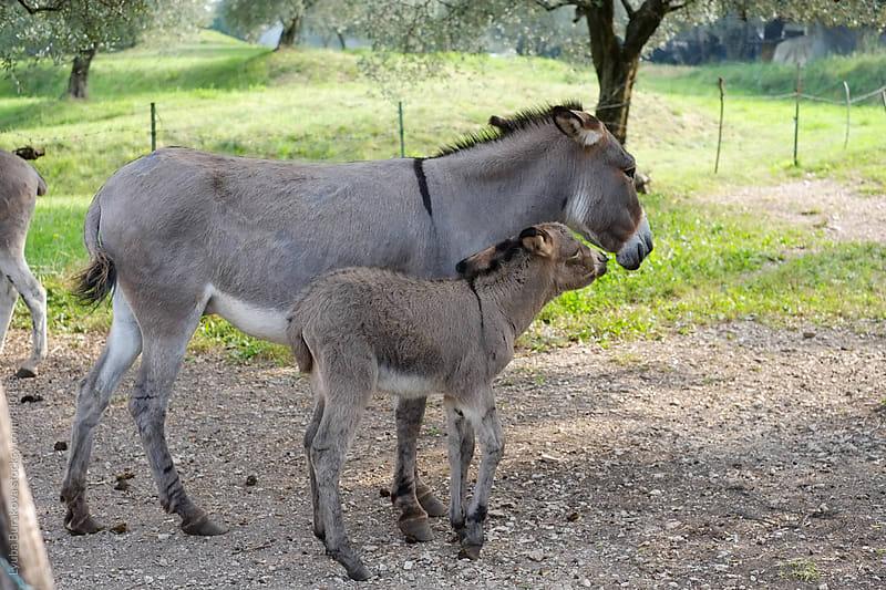 Baby donkey and his mum  by Liubov Burakova for Stocksy United