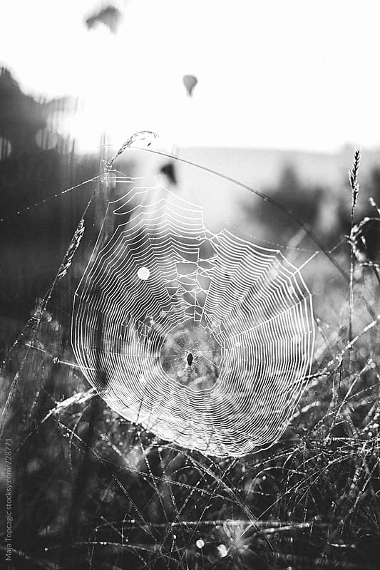 Spider web at sunrise by Maja Topcagic for Stocksy United