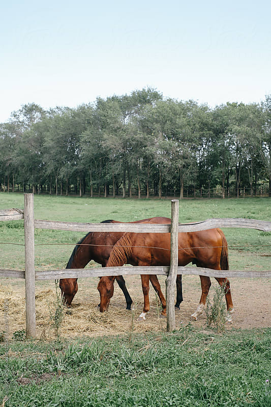 Horses on the Farm by Brkati Krokodil for Stocksy United