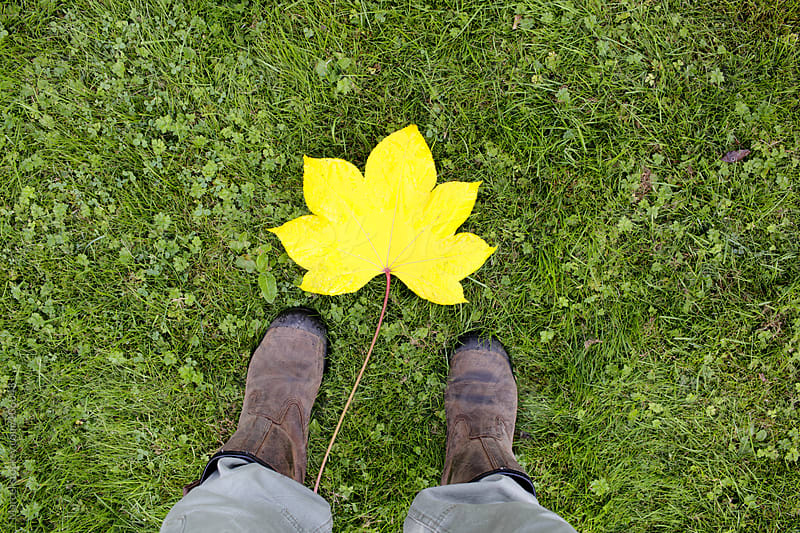 The giant yellow leaf by Marcel for Stocksy United